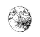 kuroda-kiyoshi-mirror-eyecatch